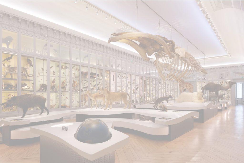Museum d'Histoire Naturelle, Bordeaux